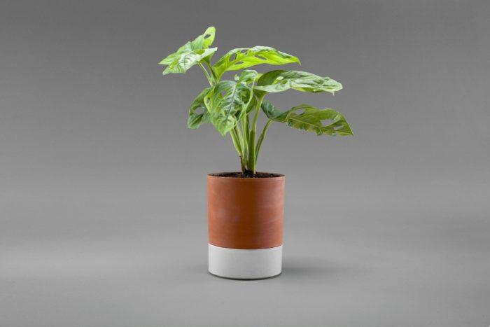 pot plante arrosage facile avec terreau et soucoupe