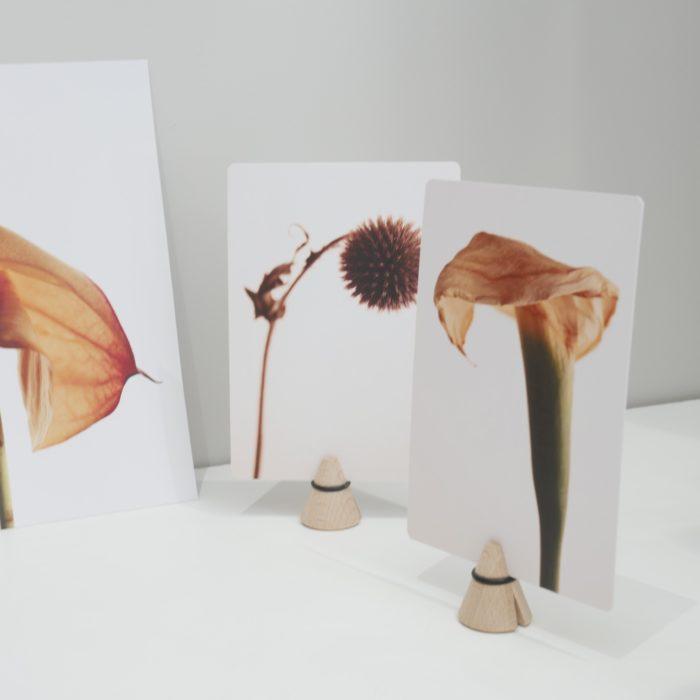 Carte postale_fleur séchée_ arum