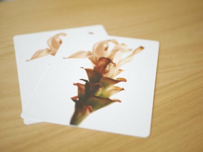 Carte_postale_Curcuma_fleur_fanée_11x15cm_papier haute qualité_L'Inatelier_Nantes_Mem'pasmal