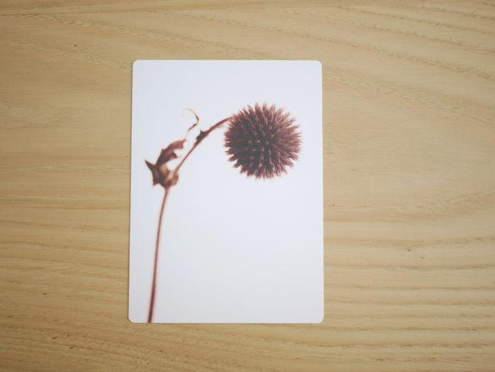 Carte_postale_chardon_fleur_fanée_11x15cm_papier haute qualité_L'Inatelier_Nantes_Mem'pasmal