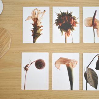 Carte_postale_lot de 6_fleurs_fanée_11x15cm_papier haute qualité_L'Inatelier_Nantes_Mem'pasmal