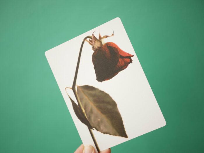 Carte_postale_rose_fleur_fanée_11x15cm_papier haute qualité_L'Inatelier_Nantes_Mem'pasmal