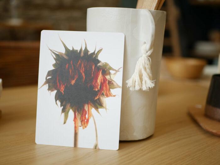 Carte_postale_tournesol_fleur_fanée_11x15cm_papier haute qualité_L'Inatelier_Nantes_Mem'pasmal